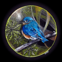 """Bluebird"" color pencil on black paper. Copyright 2018 Kate Zamarchi. All rights reserved."