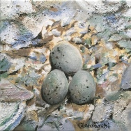 """""""Plover Eggs"""" 8""""x8"""" acrylic on canvas. Copyright 2018 Kate Zamarchi. All rights reserved."""