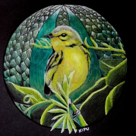"""""""Warbler"""" color pencil on black paper. Copyright 2018 Kate Zamarchi. All rights reserved."""