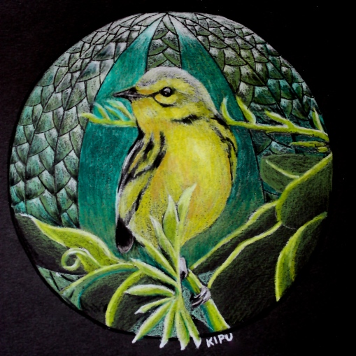 """Warbler"" color pencil on black paper. Copyright 2018 Kate Zamarchi. All rights reserved."