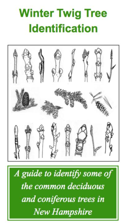 Winter Twig Tree Identification
