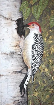 """Woodpecker on Birch"" 24""x40"" acrylic on canvas. Copyright 2011 Kate Zamarchi. All rights reserved."