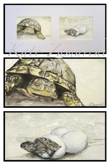 Blandings Turtles