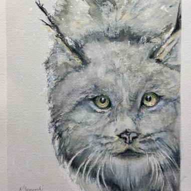 """""""Canadian Lynx"""""""